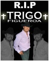 trigo-rip.jpg